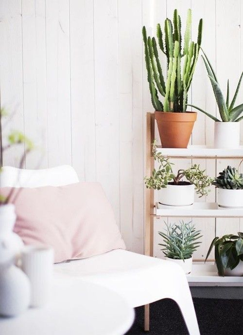 Mi casa mi selva 20 ideas para decorar con plantas de for Decoracion de casas con plantas de interior