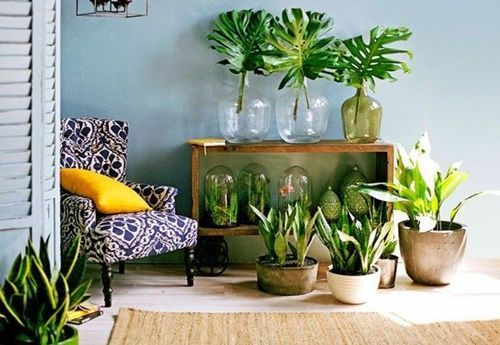 en ¡Mi casa, mi selva! 20 ideas para decorar con plantas de interior