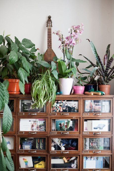 Mi casa mi selva 20 ideas para decorar con plantas de for Plantas de interior ikea