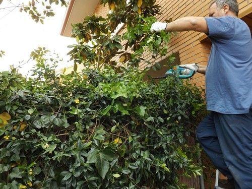 Herramientas de jardiner a para podar f cilmente setos y for Herramientas jardineria ninos